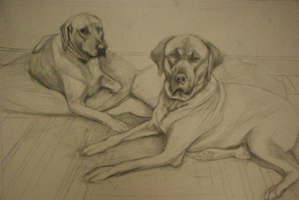 A charcoal drawing of two Rhodesian Ridgeback dogs.